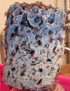 fourmilière fourmis champignonières